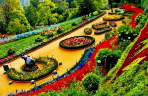 ooty-places to visit